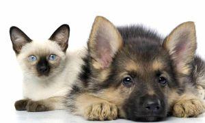 Налог на домашних животных в России в 2021 году – последние новости