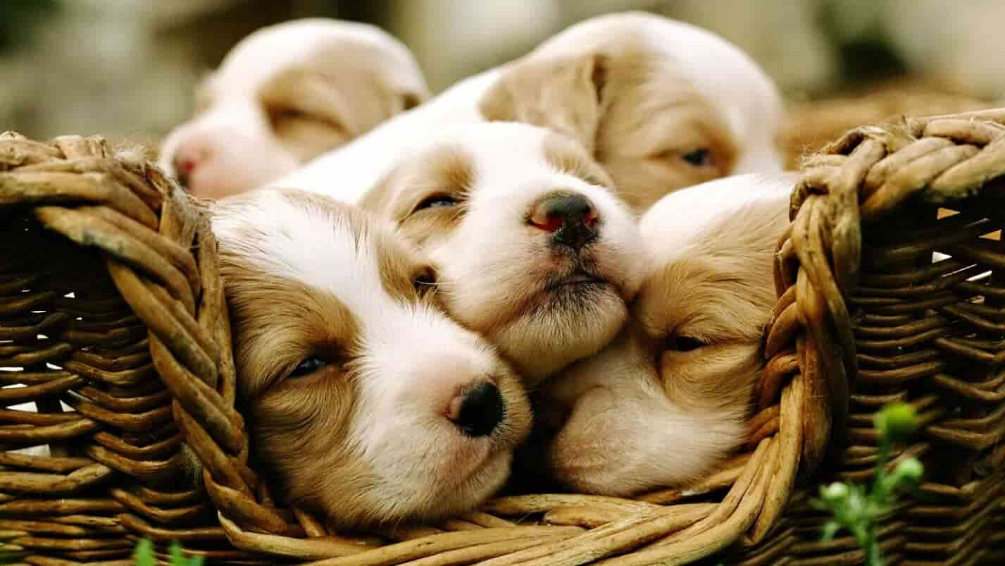 закон о налоге на животных