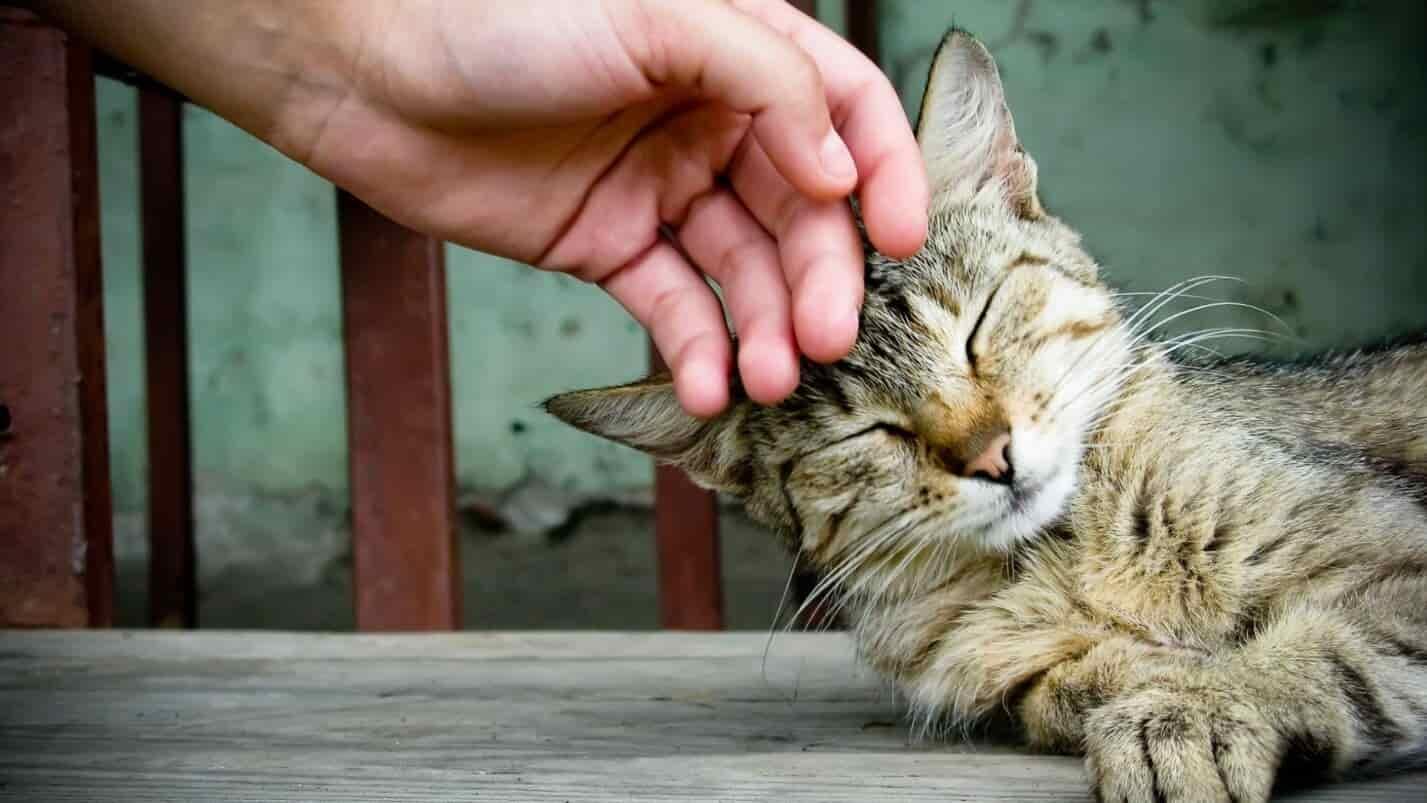 закон о домашних животных в россии 2021