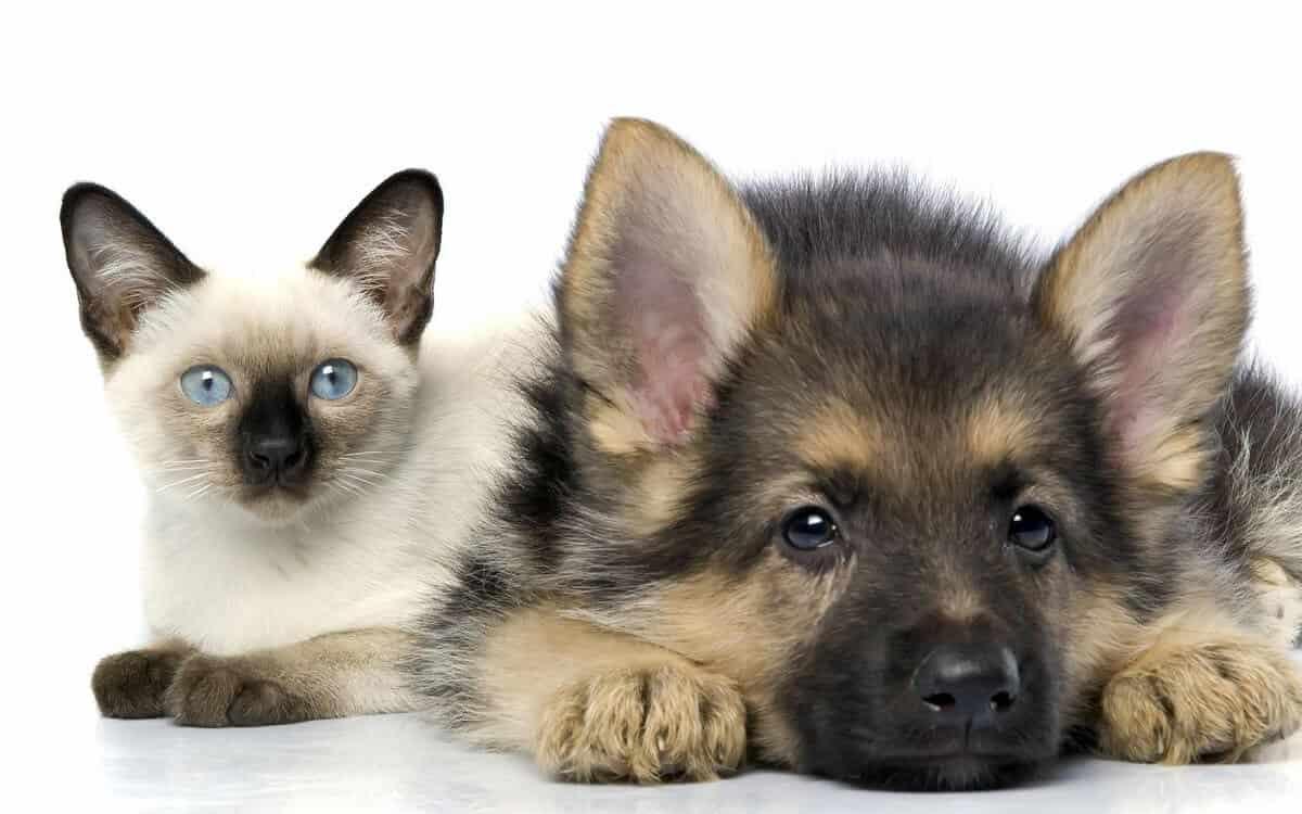 налог на домашних животных в россии в 2021 году